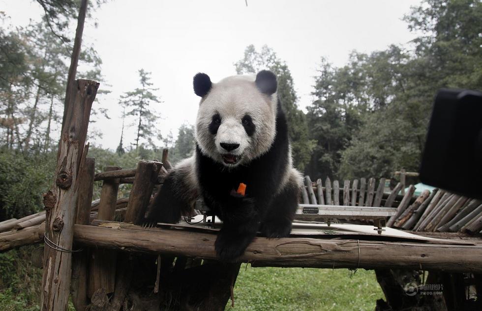 云南野生动物园就给园内的小动物进行了