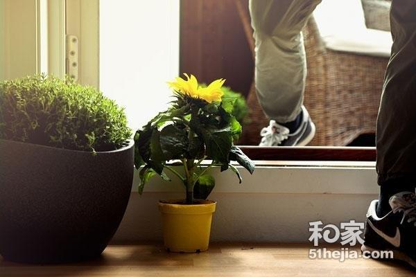 入户花园效果图推荐 玄关   室内花园 入户花园装修设计效果